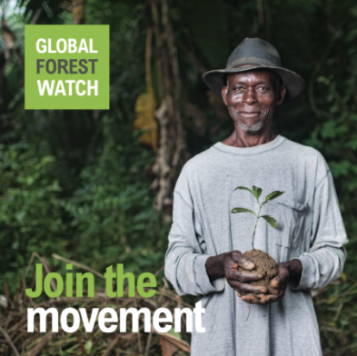 Branch Out with the Global Forest Watch