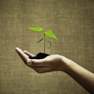 Turn Your Gardening Hobby into a Charity