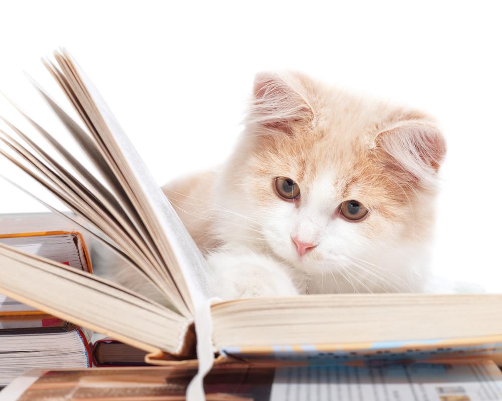 A cat reading a book.